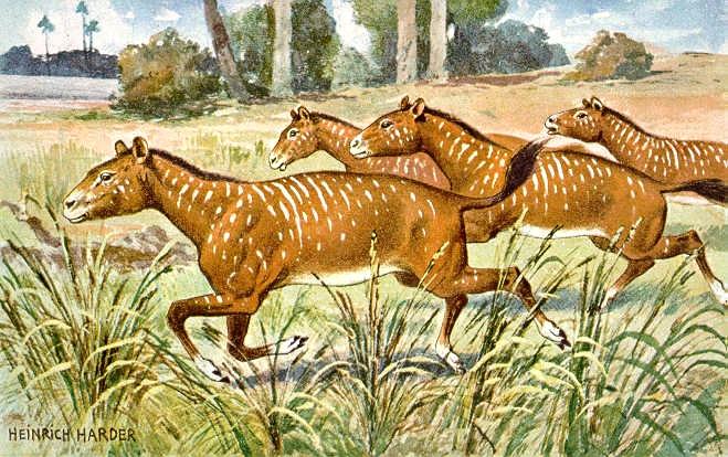 Mesohippus ancient horse