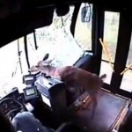 Deer-crashes-through-bus-windscreen-