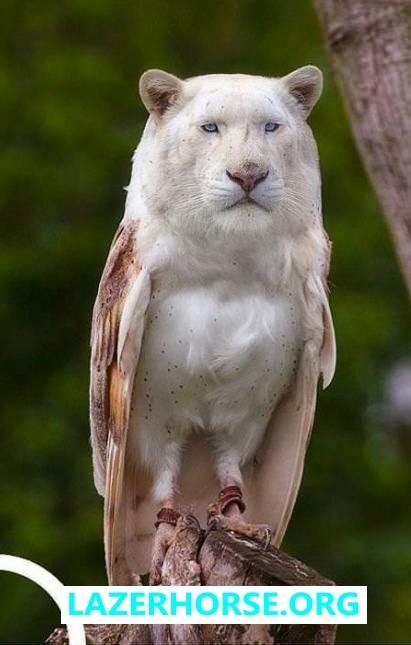 Lion Owl - Lazer Horse