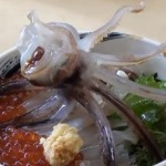 'Dancing Squid' – Japanese Bloke Eating A Cuttlefish That Looks Alive But Isn't