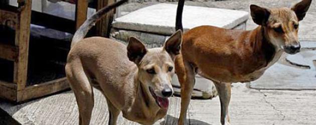 Kangaroo vs dog