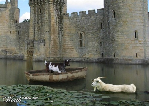 goats in weird places goat on a boat in a moat lazer horse