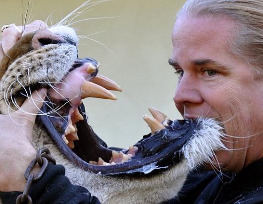 Hercules Liger Massive Teeth