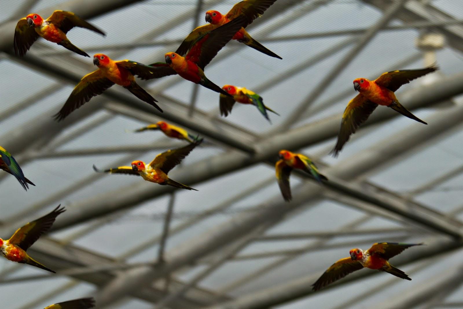 Kakegawa Kachoen Indoor Parrots
