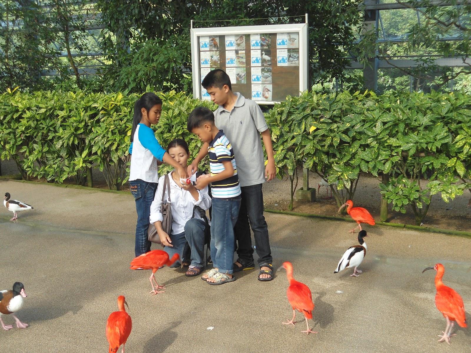 Kakegawa Kachoen Rose Ibis