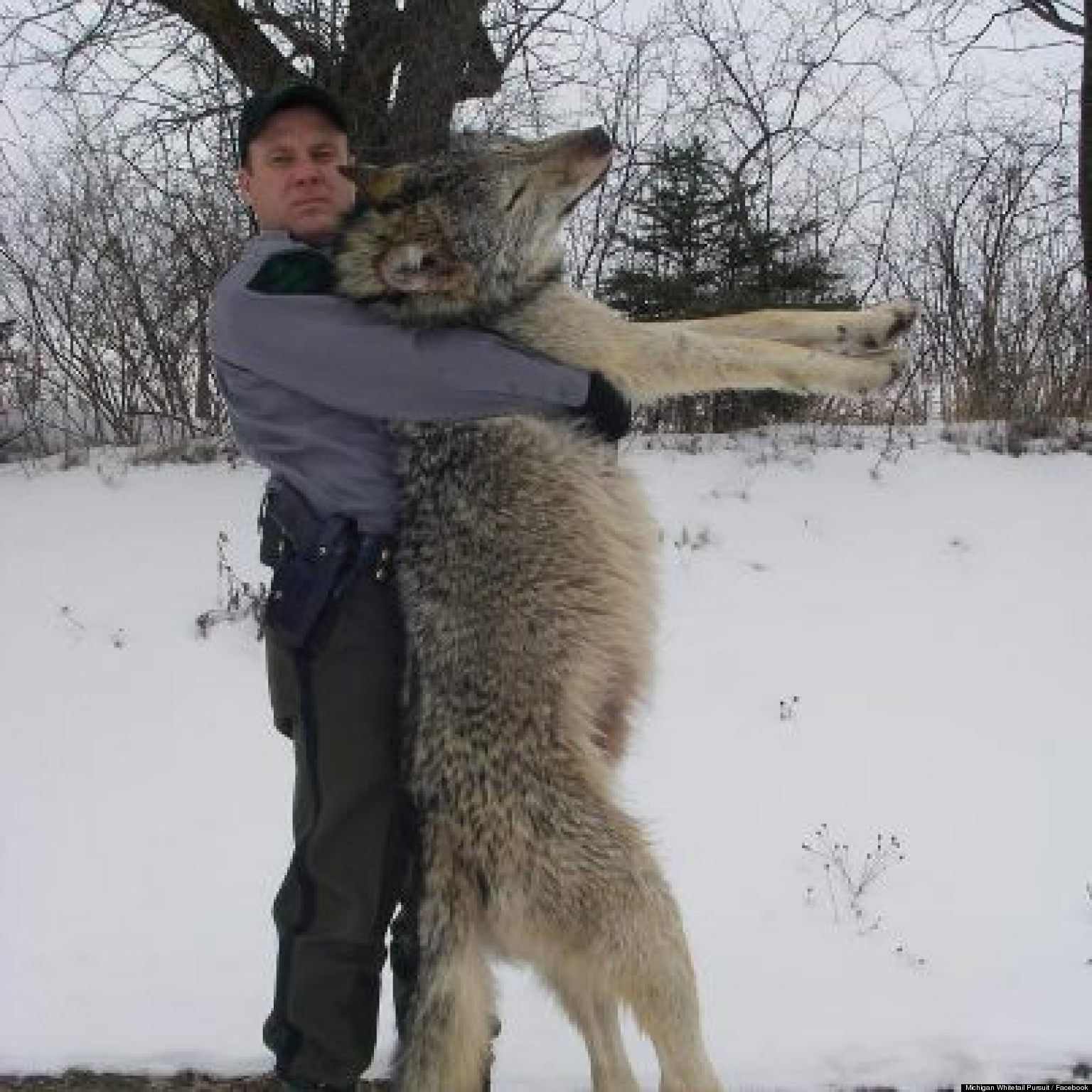 Picture of Biggest Wolf With Human