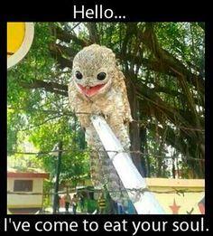 Potoo Meme - Evil