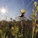 Spider Webs: What Are They Made Of? And Is Spider Silk Really As Strong As Steel?