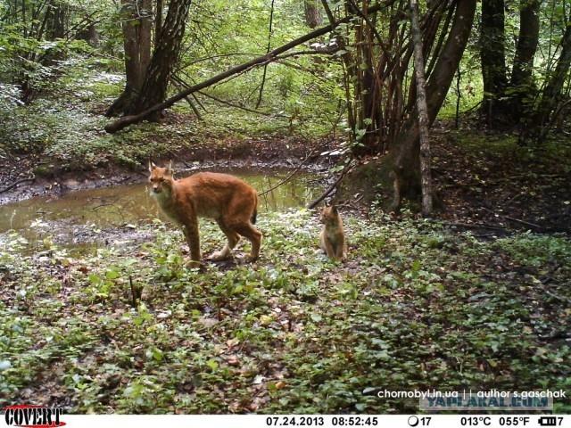 Real Mutant Animals Prypiat Wildlife: The ...