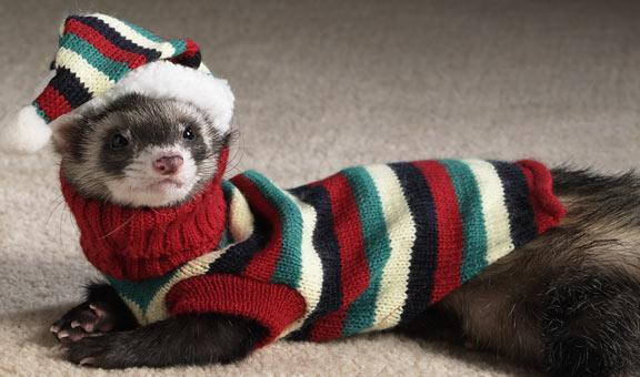 mink-wearing-mink