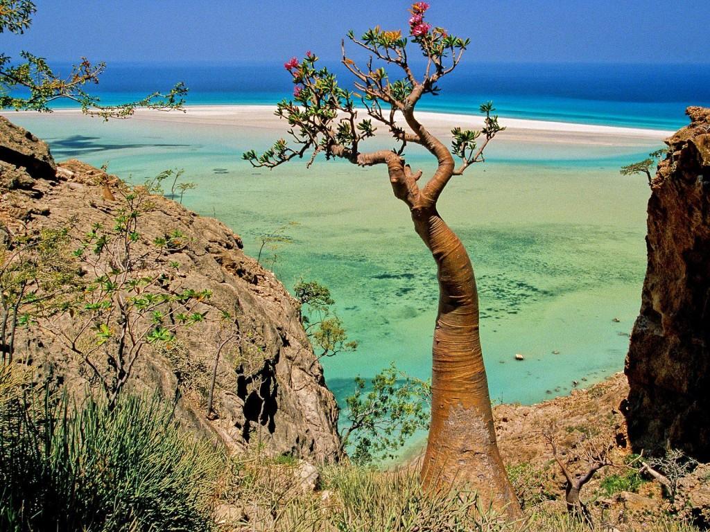 Socotra - alien landscape - Yemen - Tree