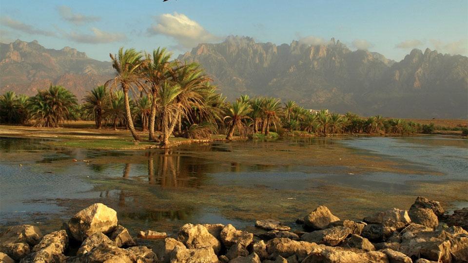 Socotra - alien landscape - Yemen - beauty