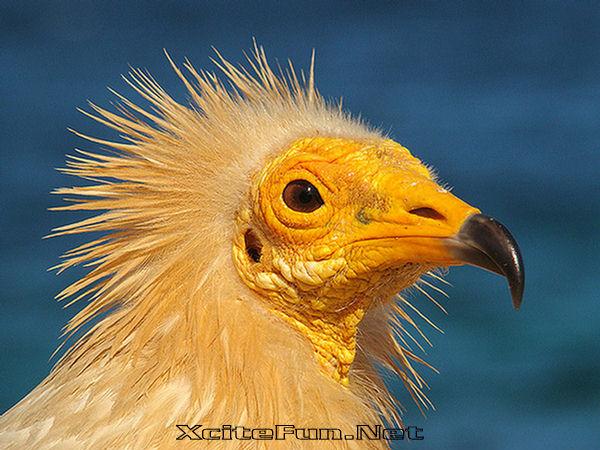 Socotra - alien landscape - Yemen - eagle