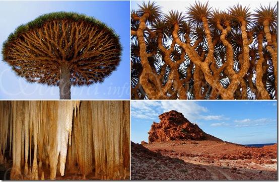 Socotra - alien landscape - Yemen - selection