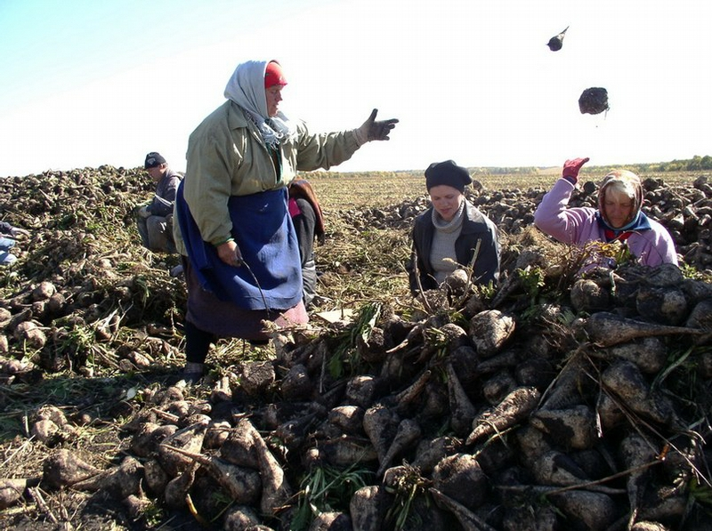 Russian Village Everyday Life - vegetables