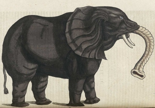 Medieval Monsters - Conrad Gesner's Historiae animalium - elephant