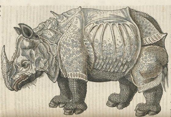 Medieval Monsters - Conrad Gesner's Historiae animalium - rhino