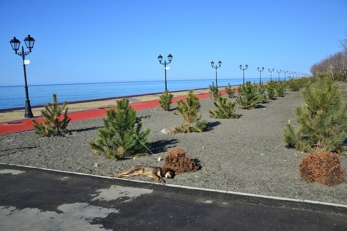 Sochi After Olympics 2014 - dead dog