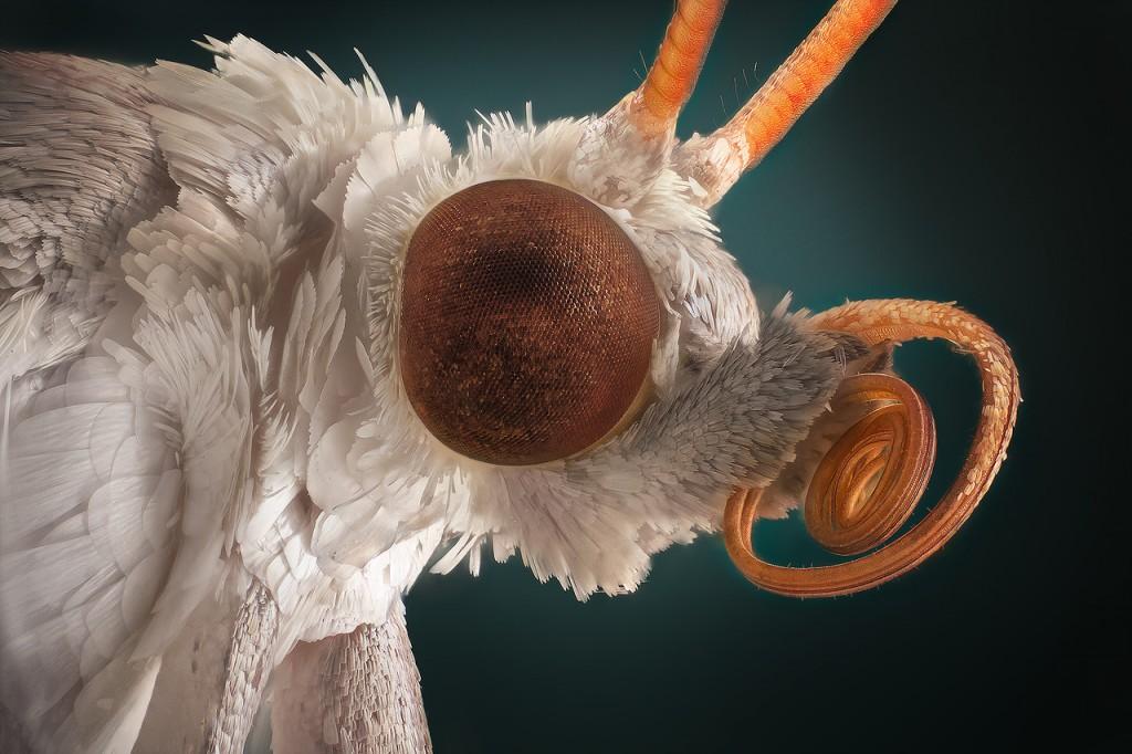 Vasiliy Menshov - macro insect photos 1