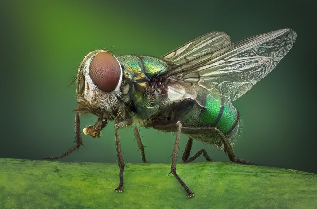 Vasiliy Menshov - macro insect photos 3