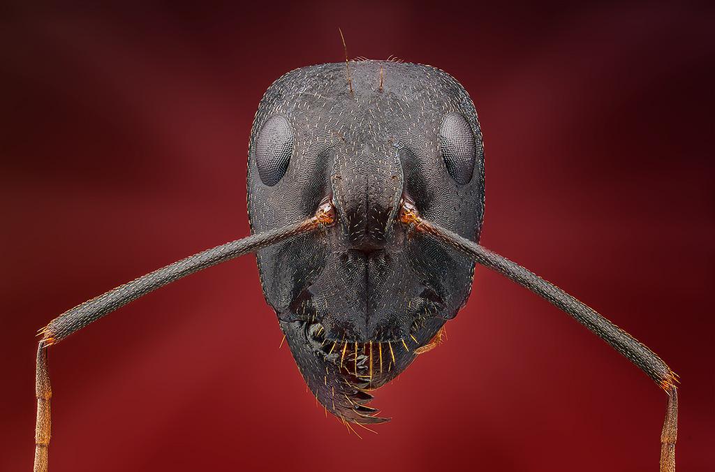 Vasiliy Menshov - macro insect photos 4
