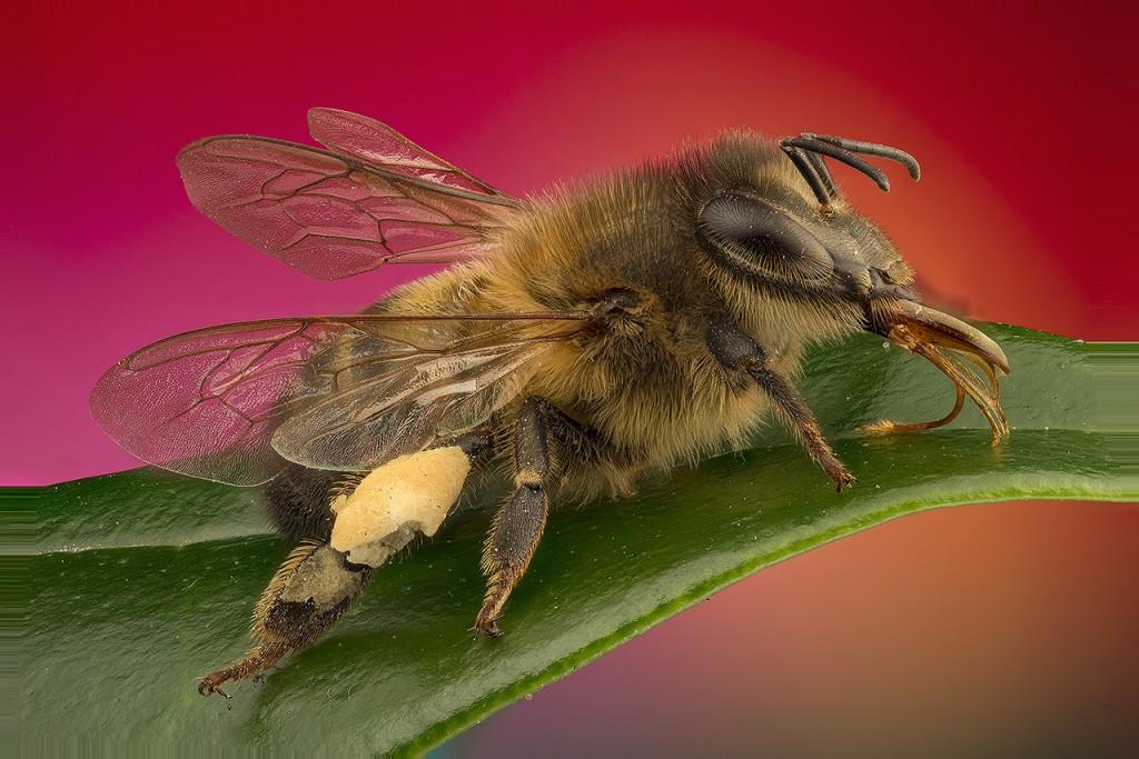 Vasiliy Menshov - macro insect photos 5