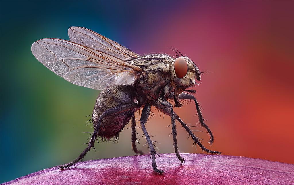 Vasiliy Menshov - macro insect photos 6