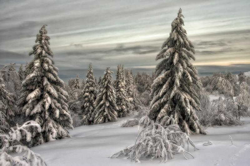 Winter In Russia Vladimir Chuprikov - soft trees