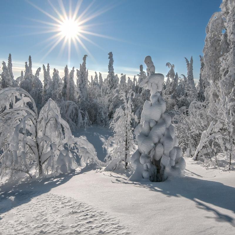 Winter In Russia Vladimir Chuprikov - starlit
