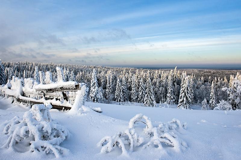 Winter In Russia Vladimir Chuprikov - winter forest