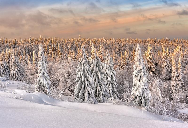 Winter In Russia Vladimir Chuprikov - woods