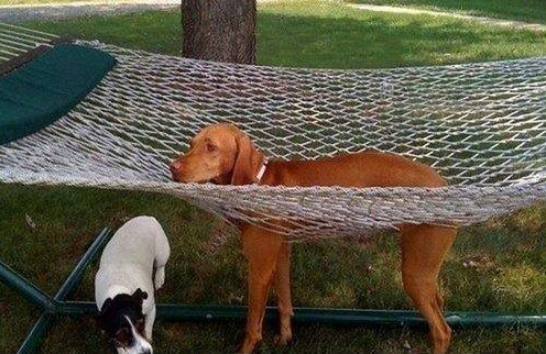 Animals Stuck in Odd Places But Which Don't Seem To Mind ...