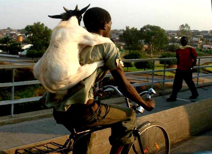 Baphomet - goat rider