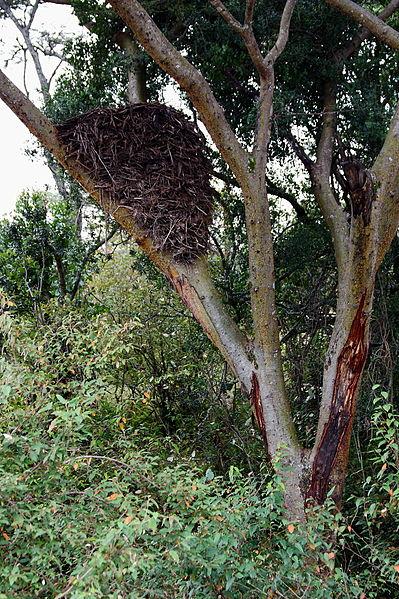 Mozambique Birds - Hamerkop nest