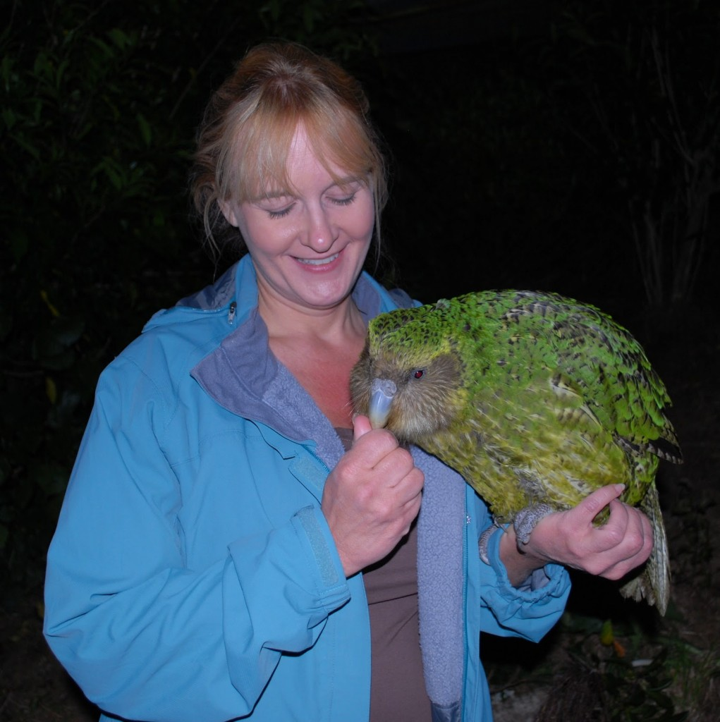 New Zealand Birds - Kakapo with person