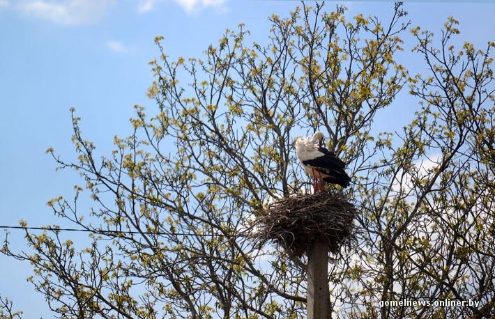 Chernobyl Belarus - Stork in nest