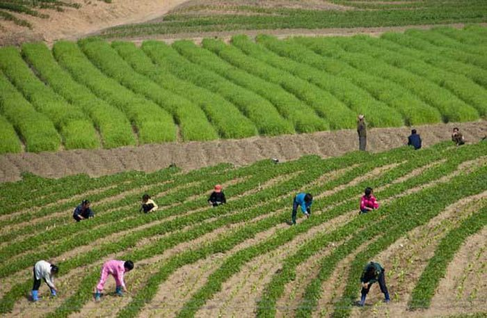 North Korea Rare Deleted Photos - Child workers