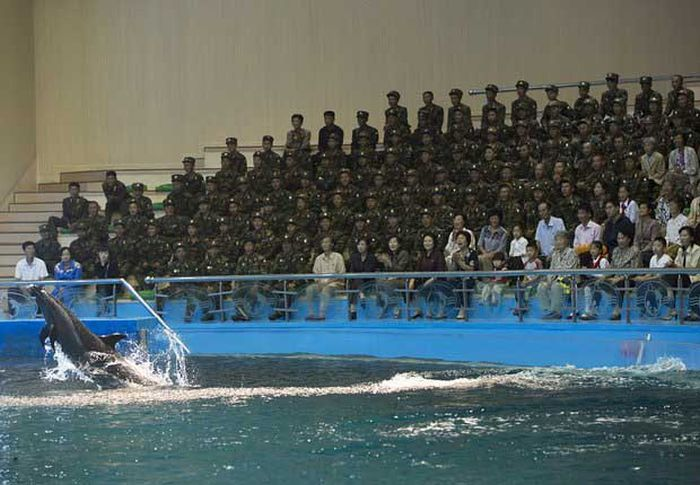 North Korea Rare Deleted Photos - army dolphin