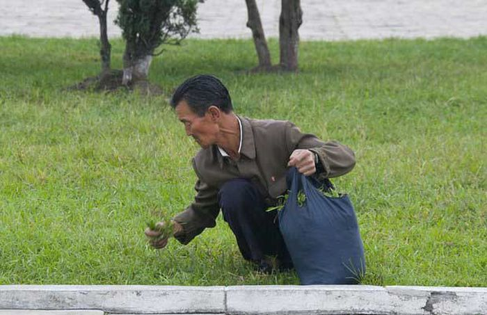 North Korea Rare Deleted Photos - not eating grass
