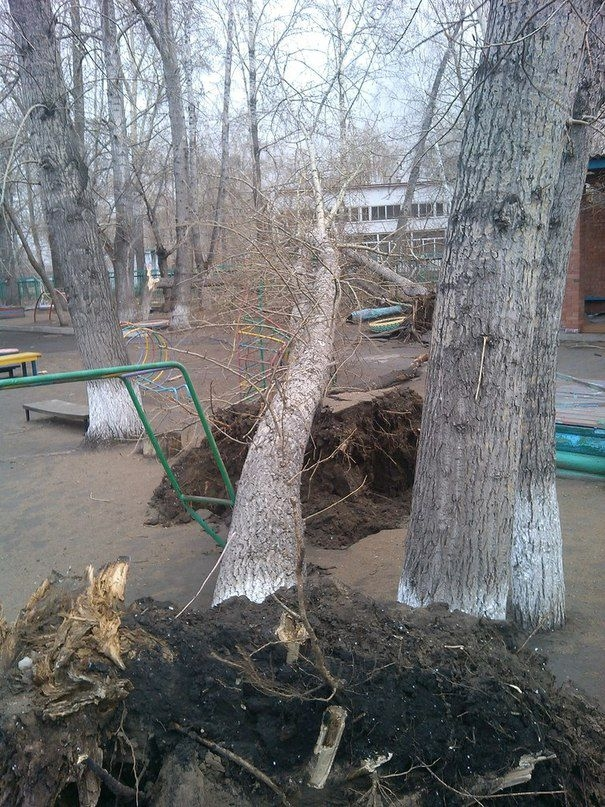 Omsk High Winds Russia - uprooted tree