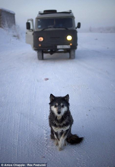 Oymyakon - coldest village town - East Siberian Leika