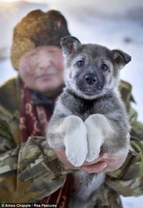 Oymyakon - coldest village town - Puppy