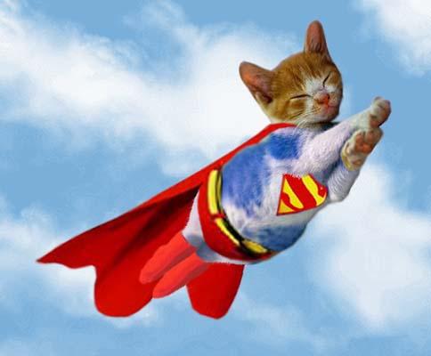 Super cat saves boys life video