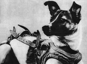 Animals in space - Laika