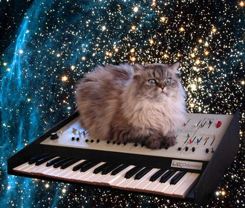 Animals in space - zero gravity cat