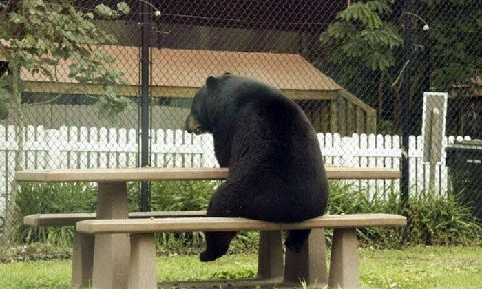 Bear sitting on a bench