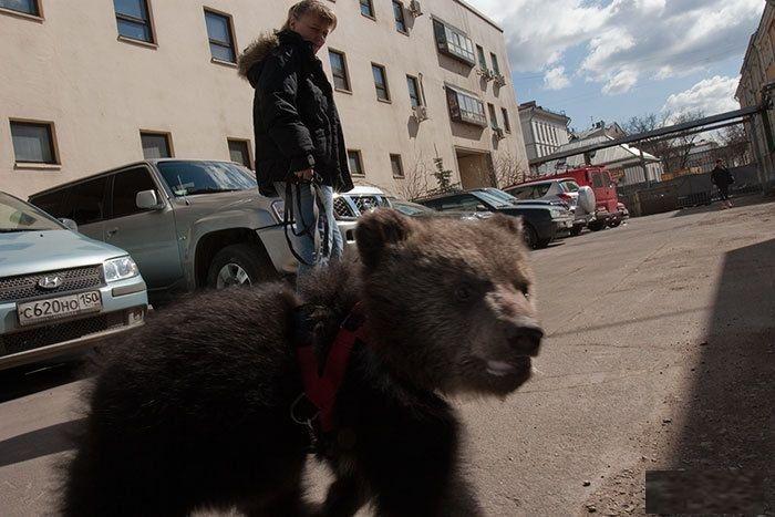 Bears Russia - baby bear
