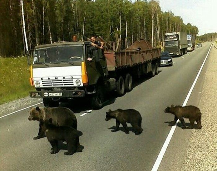 Bears Russia hold up traffic