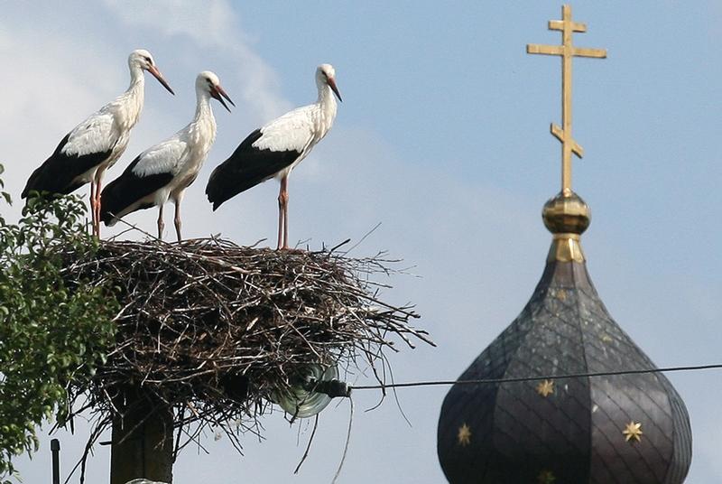Belarus Village Life - stork