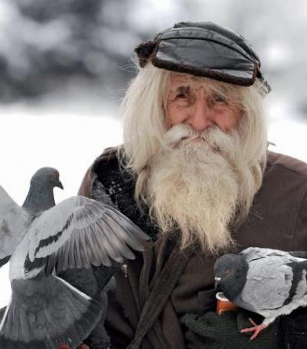 Dobri Dobrev - Bulgaria pigeon